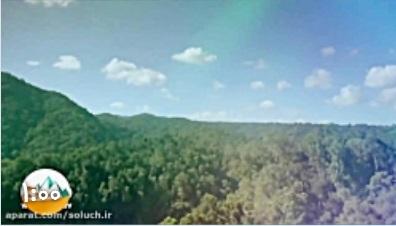 چرا باید جنگل هارا حفظ کنیم؟