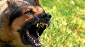 چگونه از حمله سگ هار جانمان نجات دهیم؟