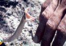 چگونه جانمان را از نیش مار سمی نجات دهیم؟! +دانلود ویدئو زیرنویس فارسی