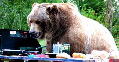 چگونه مواد غذایی را از حیوانات محافظت کنیم؟ قوطی های مخصوص